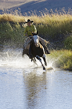 Cowgirl riding in water, wildwest, Oregon, USA