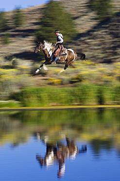 cowboy horseriding, Oregon, USA