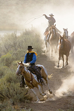 cowboys with horses, Oregon, USA