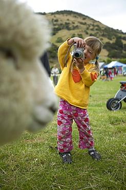 Girl photographing sheep, Okains Bay Bank`s Peninsula, east coast, South Island, New Zealand