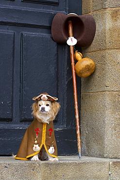 Dog in pilgrim dress, Praza do Obradoiro, Santiago de Compostela, Galicia, Spain