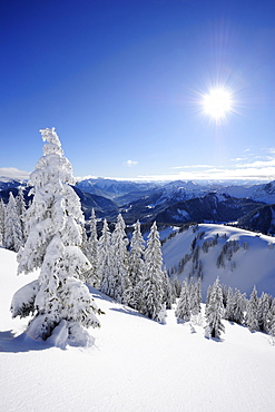 Winter forest at Wallberg, Wallberg, Tegernseer range, Bavarian Prealps, Upper Bavaria, Bavaria, Germany