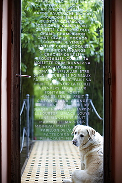 Dog in front of engraved glass door, B and B Chambre Avec Vue, Luberon, France