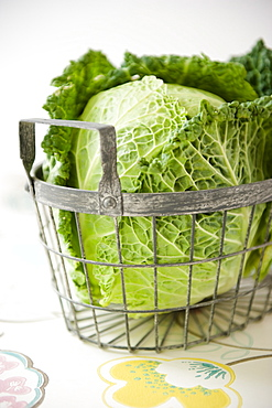 Green cabbage in a basket, Homegrown