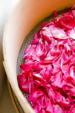 Dried pink rose petals, Flowers, Homemade