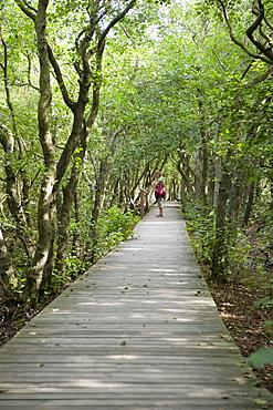 Wooden path near Norddorf, Amrum, North Frisian Islands, Schleswig-Holstein, Germany