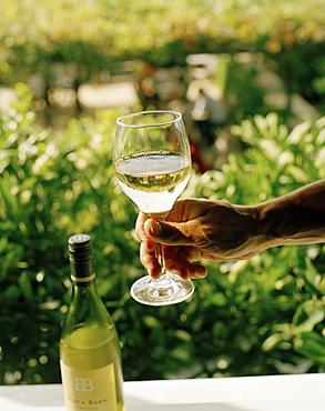 Wine tasting, hand holding a wineglass of white wine, Black Barn Vineyards, Havelock North, Hawke`s Bay, North Island, New Zealand