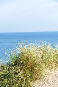 Sand dunes with dune grass, Sylt, Schleswig-Holstein, Germany