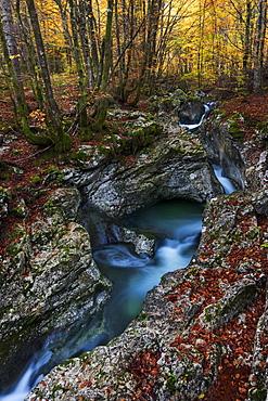 Suha mountain stream meanders through the limestone rocks in primeval beech forests of the Triglav National Park, Gorenjska, Slovenia