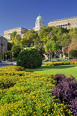 Flowers in the round about traffic, Buda Castle, Budapest, Hungary