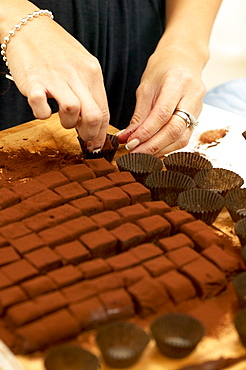 Arranging Freshly Made Chocolates into Baking Cups, Montreal, Quebec