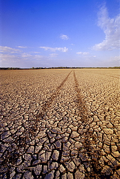 Farmland affected by Drought, Red River Valley, Manitoba