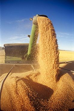 Grain Wagon Loading a Farm Truck, Tiger Hills, Manitoba