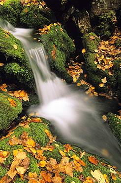 Mount head creek, Mount Carleton Provincial Park New Brunswick.