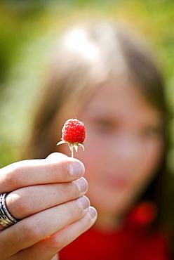 Girl's hand holding raspberry, Lincoln Gardens, Lumsden, Saskatchewan