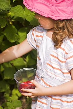Girl picking raspberries, Lincoln Gardens, Lumsden, Saskatchewan