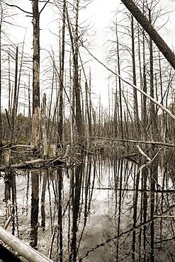 Flooded forest in Muskoka, Ontario