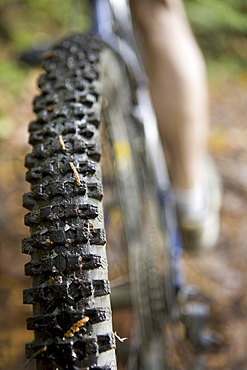 Close up of Mountain Bike Tread, Stanley Park, Vancouver, British Columbia