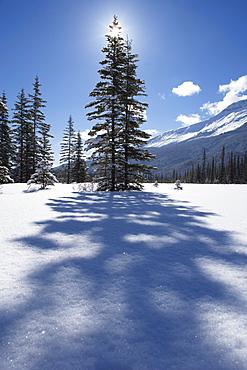 Rampart Flats in Winter, Banff National Park, Alberta