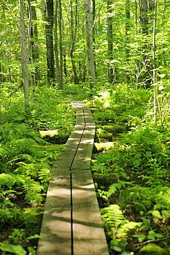 Chikanishing Trail, Killarney Provincial Park, Ontario