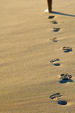 Footprints in Sand along Lake Superior Beach, Wawa Ontario