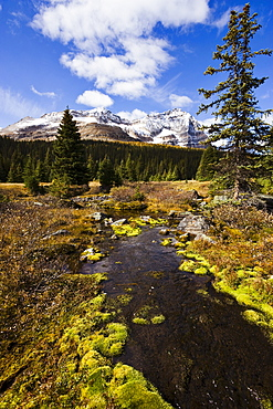 Creek and Odaray Mountain, Yoho National Park, British Columbia