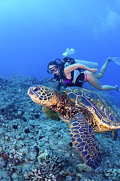 Hawaii, Diver gets a close-up view of a green sea turtle (Chelonia mydas)