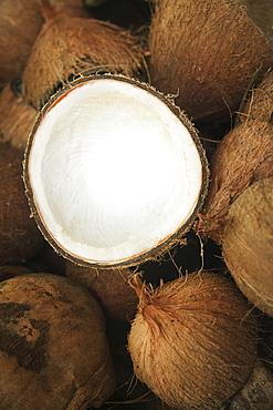Hawaii, Oahu, A coconut in halves, white meaty fruit.