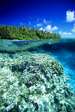 Micronesia, Pohnpei, Over/under view of hard coral reef and Ant Atoll.