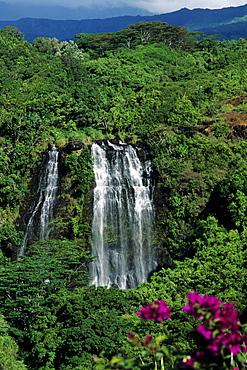 Hawaii, Kauai, Opaekaa Falls in lush green surroundings.