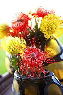 Hawaii, Pincushion protea flower arrangement.