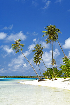 French Polynesia, Tahiti, Maupiti, lagoon beach with Palms trees and blue Sky.