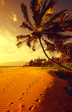 Hawaii, Maui, Kihei, Palm tree over beach in golden lighting, Footprints in sand.