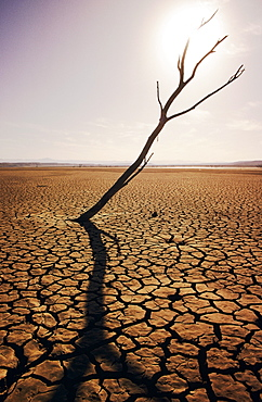 California, El Mirage, Tree snag and cracked mud in dry lake bed.