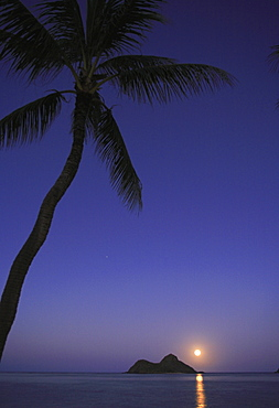 Hawaii, Oahu, Lanikai, Full moon rising over one of the Mokulua islands with a palm tree in the foreground