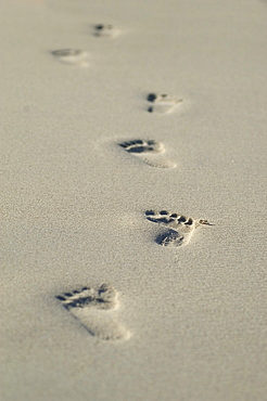 Thailand, Phuket, Close-up of footprints along the seashore.
