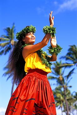 Hula dancer in Kahiko style dress, blue sky background coconut trees