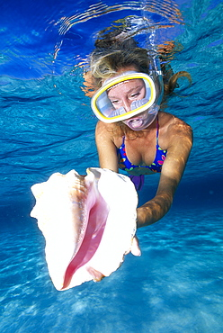 Caribbean, Cayman Islands, Grand Cayman Island, Snorkeler holds shell, woman at surface clear turquoise water B1308