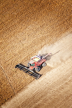 Aerial view of a combine harvesting soybeans in Kent County; Rock Hall, Maryland, United States of America