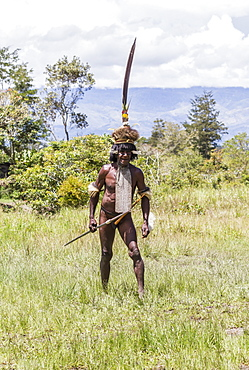 Dani man engaged in a mock battle with a long spear, in a display of prowess and opulence of dress and decoration, Obia Village, Baliem Valley, Central Highlands of Western New Guinea, Papua, Indonesia
