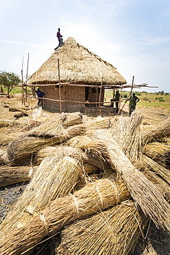 Workers building a grass thatched roof, Uganda