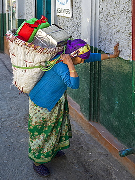 A woman pauses to rest against a wall while carrying a heavy load on her back, Darjeeling, West Bengal, India