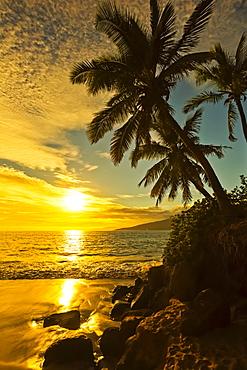 Palm trees at sunset, Kihei, Maui, Hawaii, United States of America