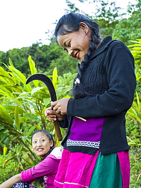 A woman of Indian ethnicity standing and using a curved blade, Sikkim, India