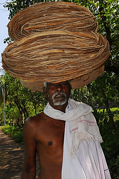 A villager carrying the banana pulp, Tanjore, Tamil Nadu, India, Asia