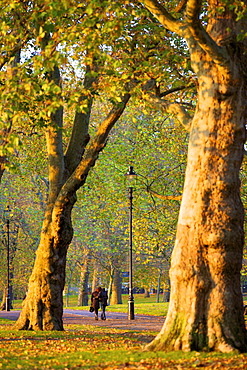 Walking in an autumnal Hyde Park, London, England, United Kingdom, Europe