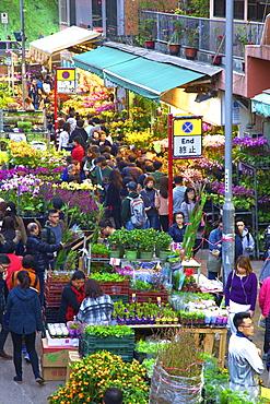 Chinese New Year Flower Market, Hong Kong, China, Asia