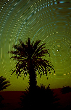 Star track in the sky and silhouette of a palm, Erg Ubari, Lybia