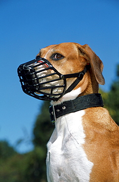 Mixed Breed Dog with muzzle