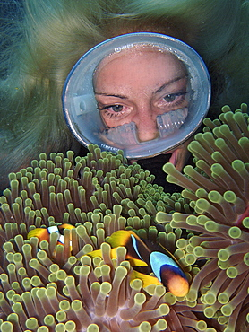 Diver with Red Sea Clownfish, Red Sea / (Amphiprion bicinctus) / diving goggles